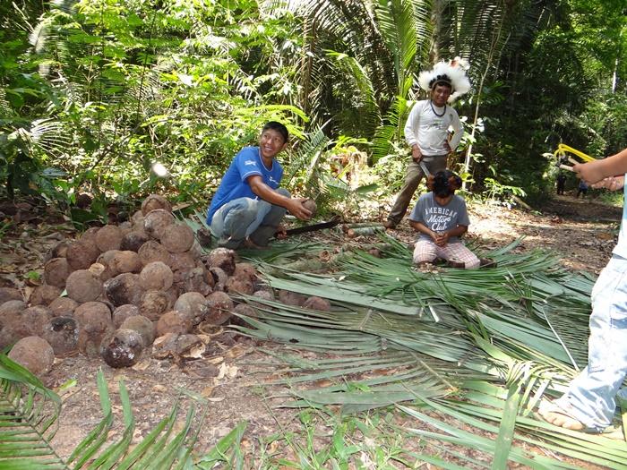 Indígenas de diversas etnias são responsáveis pelo extrativismo, que representa 95% da produção de castanha na região
