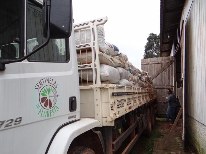 Entre abril e junho, foram exportadas mais de 2,3 mil toneladas a quase cinco dólares o quilo, mas a omissão das políticas públicas e a pandemia derrubaram a produção da castanha
