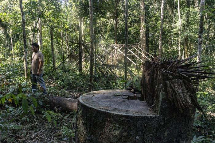As invasões de terras indígenas aumentaram 135% em 2019, depois que o governo tentou abrir essas reservas para a mineração e o agronegócio por meio de um projeto de lei enviado ao Congresso