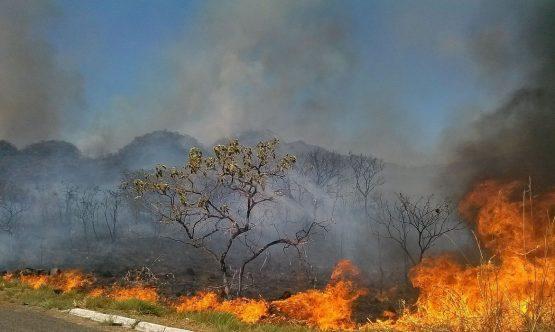 Desmatamento do Cerrado cresce 13% em um ano | Foto: Jose Cruz/Agência Brasil