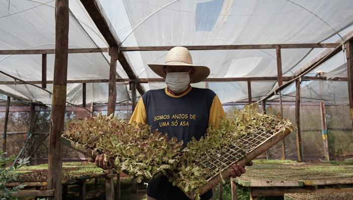 Em Nova Santa Rita, o veneno pulverizado de avião foi parar nas estufas e viveiros de mudas das plantações agroecológicas