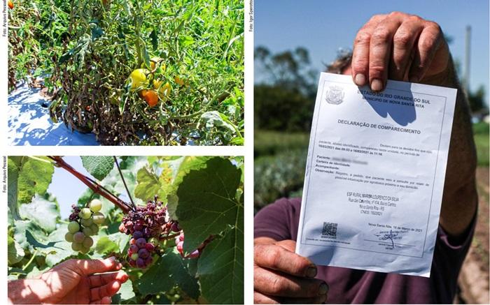 Veneno jogado por uma aeronave arruinou viveiros de mudas, hortas e pomares em Nova Santa Rita. Muitos agricultores foram parar no posto de saúde com sintomas de intoxicação