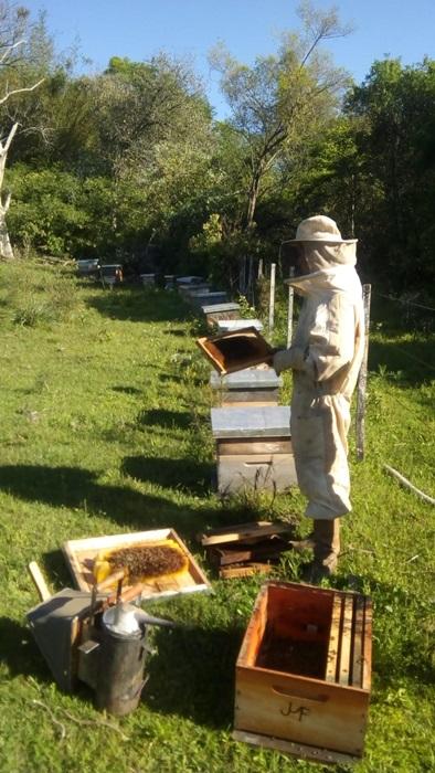 No município de Mata, a deriva provocou mortandade de abelhas e intoxicação de agricultores, mas o caso foi abafado pela comunidade