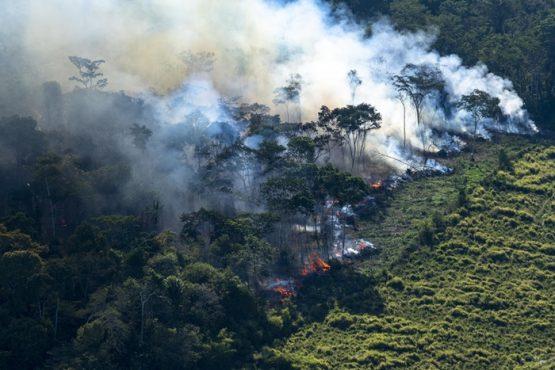 O crime de ecocídio e as denúncias contra Bolsonaro no TPI | Foto: Daniel Beltrá/Greenpeace