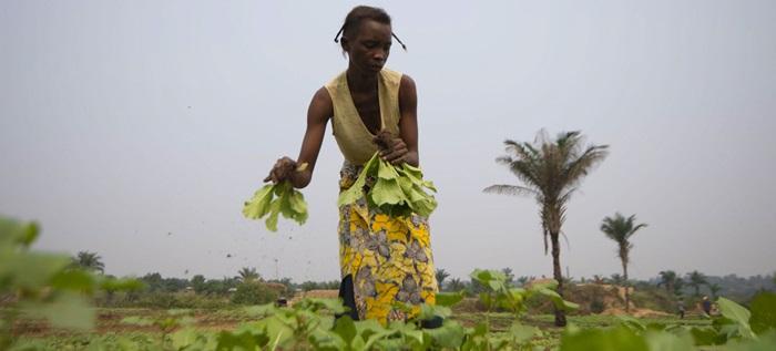 Em mensagem, Papa destacou importância dos conhecimentos tradicionais dos agricultores que não devem ser negligenciados ou ignorados
