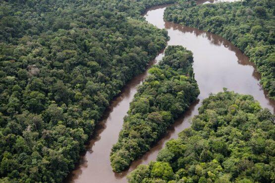Brasil 'seca' um estado do Acre nas últimas três décadas | Foto: Daniel Beltrá/ Greenpeace