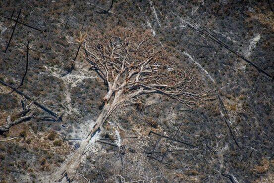 Aquecimento global no limite: Brasil paga caro pela devastação | Foto: Christian Braga / Greenpeace