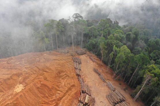 Desmatamento na Amazônia é o maior da década para um mês de agosto: mais de 1,6 mil km2 | Foto: Imazon/ Reprodução