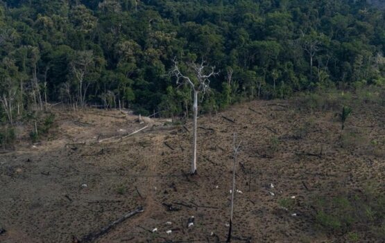 Pesquisadores projetam calor extremo por mudanças climáticas e savanização da Amazônia | Foto: Victor Moriyama / Especial Amazônia em Chamas/ Grennpeace